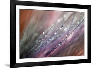 Dew 1 by Ursula Abresch