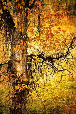 End of Autumn by Ursula Abresch