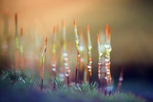 Evening Moss by Ursula Abresch