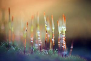 Evening Moss by Ursula Abresch