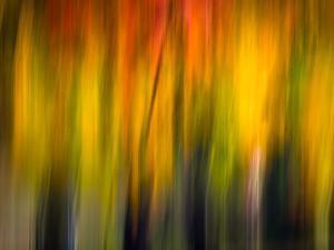Fall Light 2 by Ursula Abresch