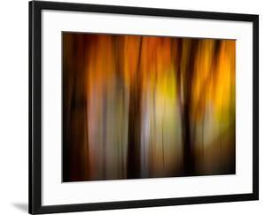 Fall Light by Ursula Abresch