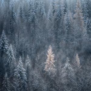 First Snow by Ursula Abresch