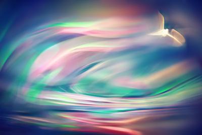 Freedom by Ursula Abresch