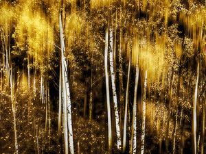 Golden by Ursula Abresch