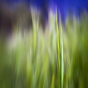 Grass Blade by Ursula Abresch