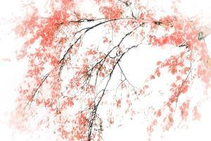 In Fall by Ursula Abresch