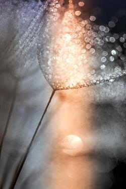In My Winter Window by Ursula Abresch