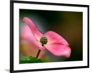 In Pink by Ursula Abresch