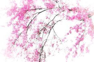 In Spring by Ursula Abresch