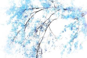 In Winter by Ursula Abresch