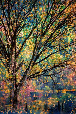 Kootenay Fall 3 by Ursula Abresch