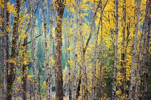 Kootenay Fall 4 by Ursula Abresch