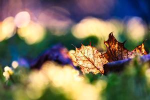 Leaf on an Autumn Morning by Ursula Abresch
