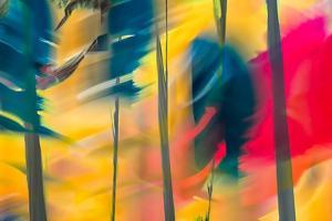 Leaning Trees by Ursula Abresch