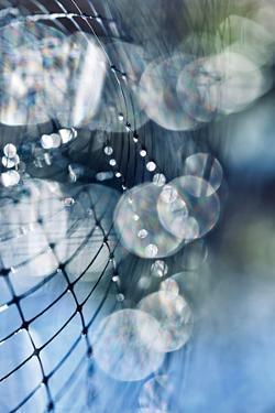 Light Bubbles by Ursula Abresch