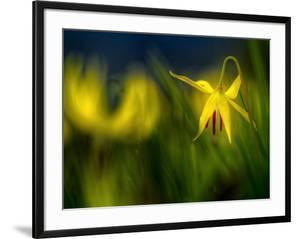 Lilies 1 by Ursula Abresch
