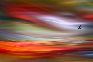 Lone Bird by Ursula Abresch