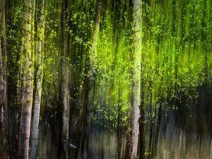 Matrix by Ursula Abresch