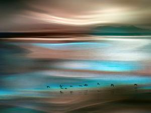 Migrations by Ursula Abresch