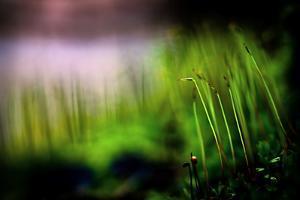 Miniature Garden by Ursula Abresch