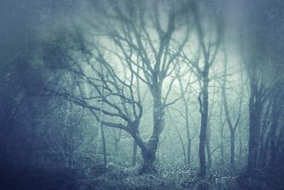 Morning Fog by Ursula Abresch