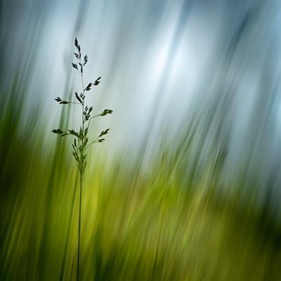Morning Grass by Ursula Abresch