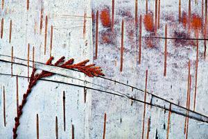 Natura Morta by Ursula Abresch