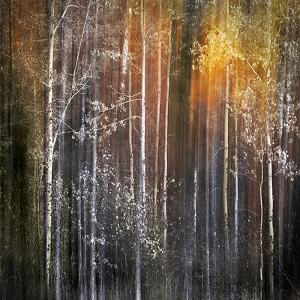 Nothing Gold Can Stay by Ursula Abresch