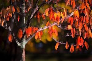 Orange Leaves by Ursula Abresch