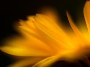 Orangesque by Ursula Abresch