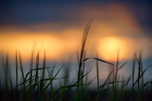 Palouse Sundown by Ursula Abresch