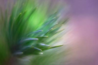 Pine Needles 5 by Ursula Abresch