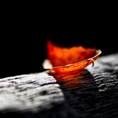 Red Bowl by Ursula Abresch