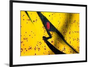 Shark by Ursula Abresch