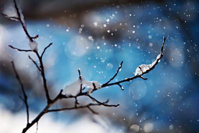 Snow Day by Ursula Abresch