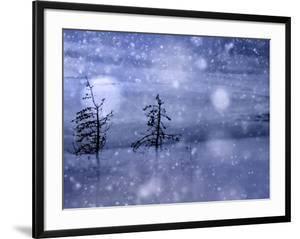 Snow Storm by Ursula Abresch