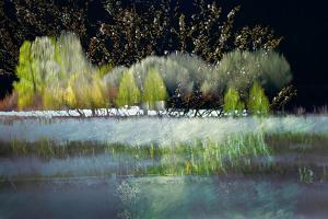 Spring Dreams by Ursula Abresch