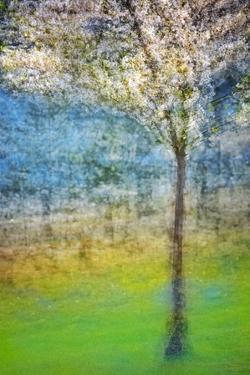 Spring Tree by Ursula Abresch