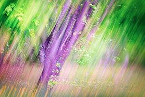 Spring by Ursula Abresch