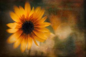 Summer Time by Ursula Abresch