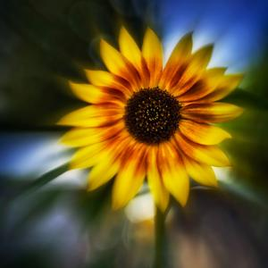 Sunflower by the Road by Ursula Abresch