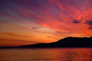Sunset Birds by Ursula Abresch