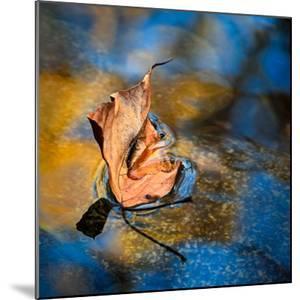 Surface Tension by Ursula Abresch