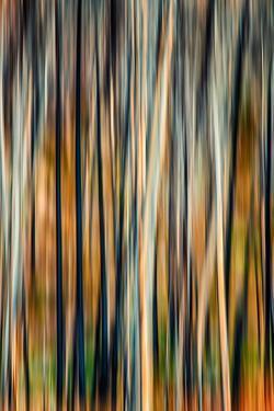 The Burn 3 by Ursula Abresch