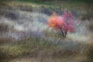 The Gentle Season by Ursula Abresch