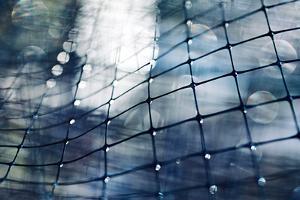Through a Thin Fence by Ursula Abresch