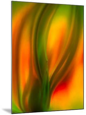 Tulip by Ursula Abresch