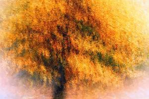 Wild Apple Tree by Ursula Abresch