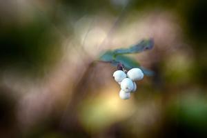 Winterberries by Ursula Abresch